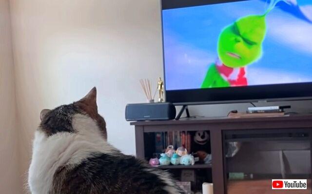 わかったわかった、テレビつけます!愛猫が映画鑑賞にハマってしまった結果