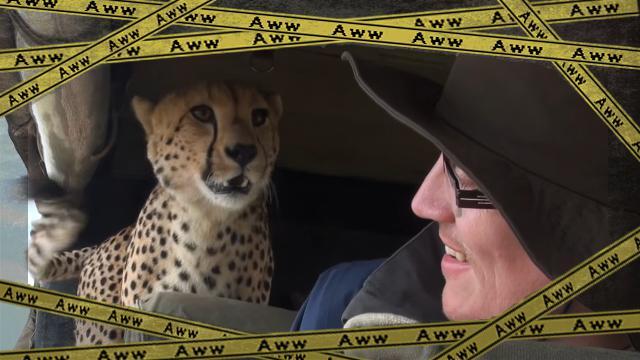cheetah-f [www-frame