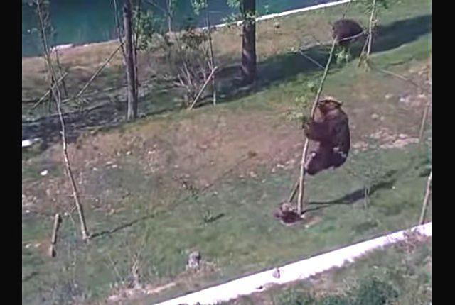 bearcub3