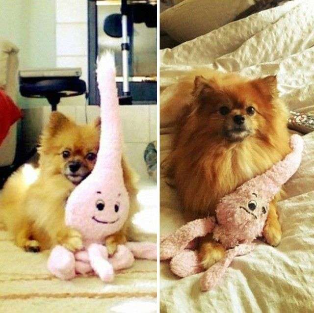 pets-growing-up-with-toys-24__700_e