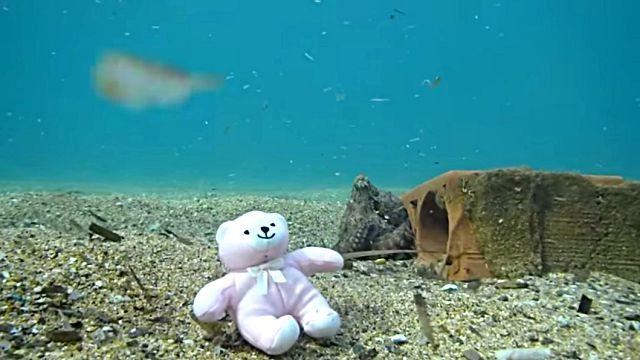 teddynoctopus3