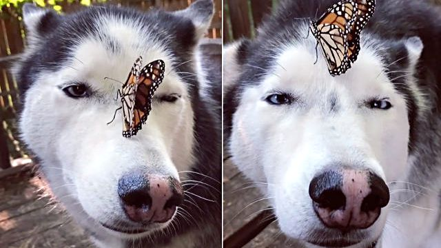 dog-butterfly-encounterA