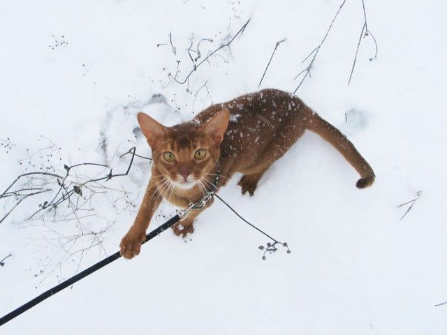 funny-animals-first-snow-cats-dogs42_e