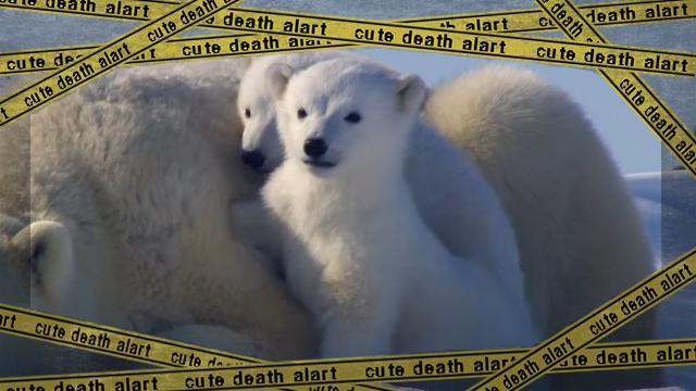 polar bear-f [www-frame