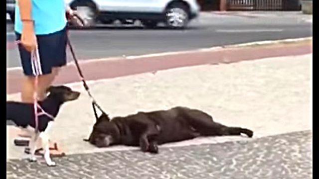 lazydog4