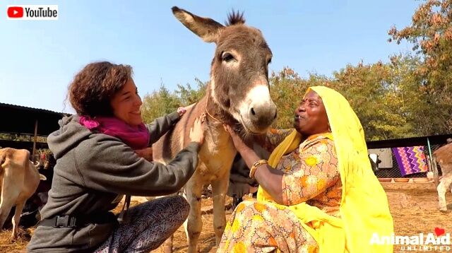 donkey7_640