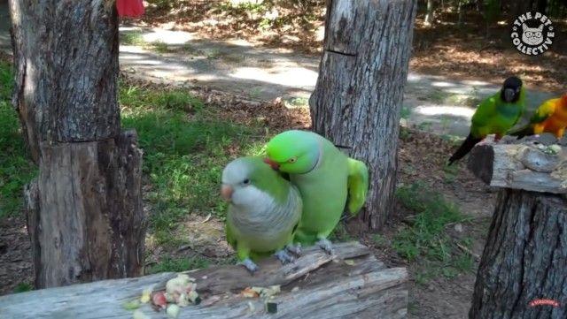 funnybirds2_e