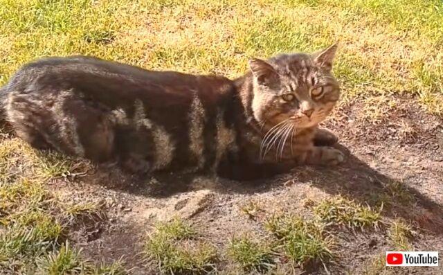 straycat3_640