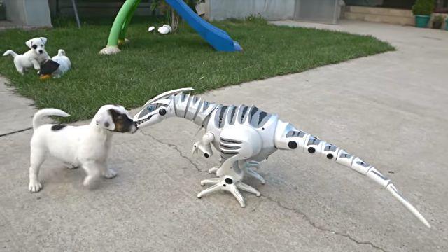 puppiesnrobot4