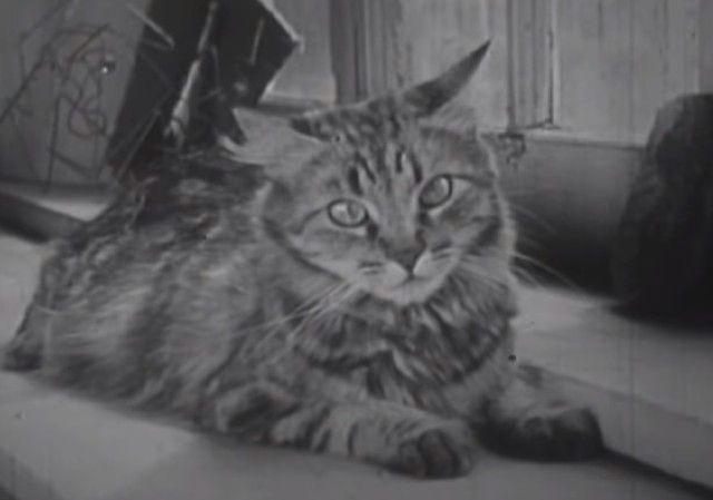 1947cats2_e