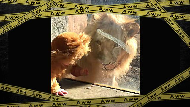 lionbaby0-frame