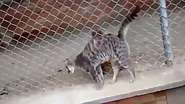catnmonkey5