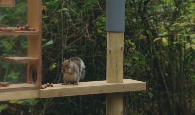 squirrelobstaclecourse6_e