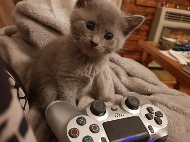 cat-12 [www.imagesplitter.net]