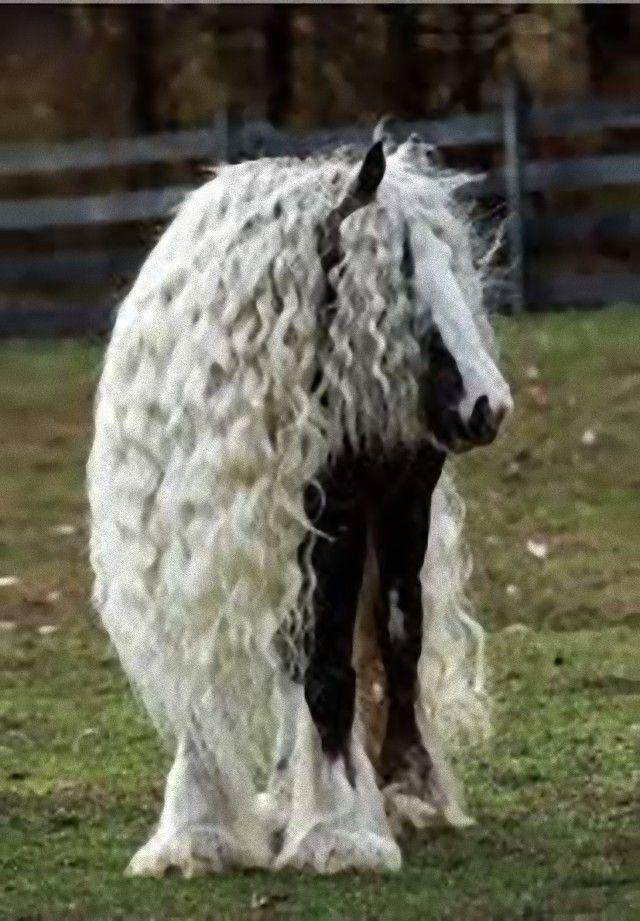 horse19_e