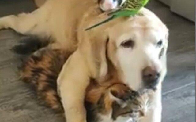 犬、猫、鳥、モルモットの異種間家族。みんなで集まってぽかぽかなひと時