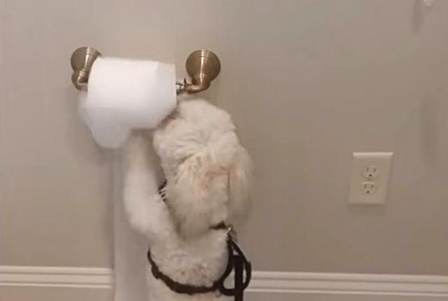 dogdaysofsummer2