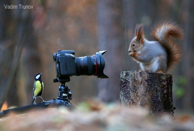 squirrel-photography-russia-vadim-trunov-1-1_e