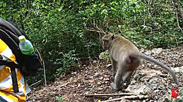 monkeywantswater2