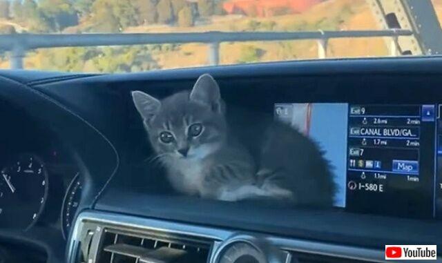 drivingcats5_640