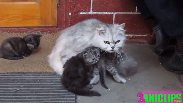momcats0_e