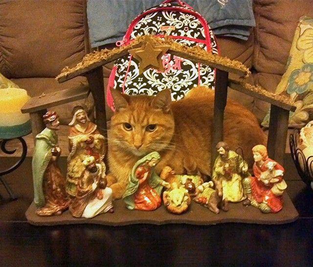 cats-crashing-nativity-scenes-140-5a27fb19e3d5f__605_e