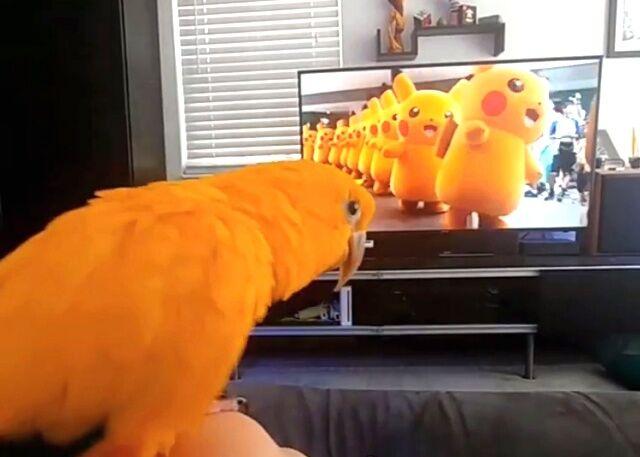 pikachu0_640