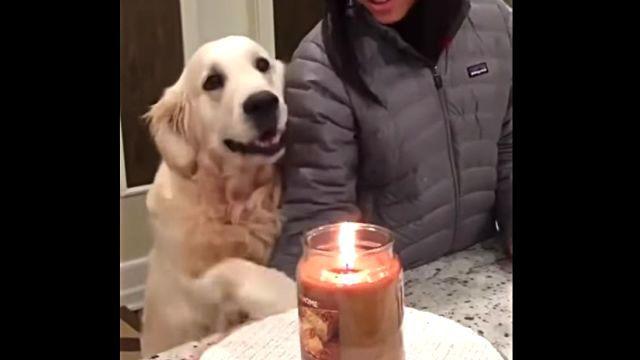 protectivedog3
