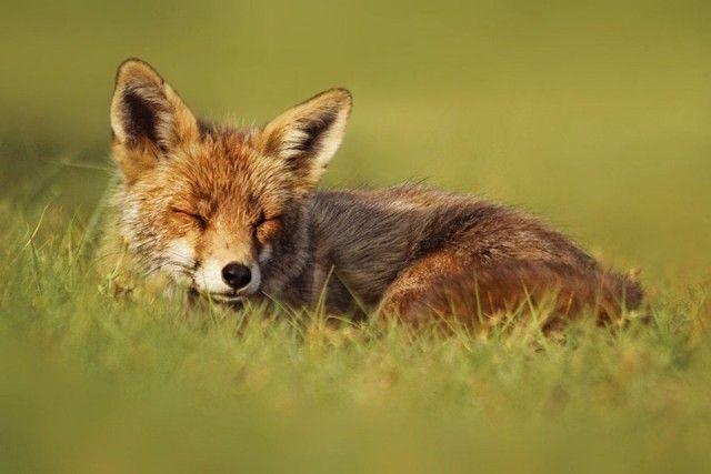 fox4_e