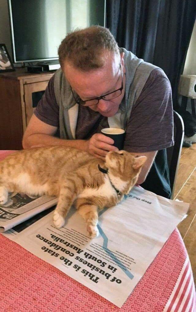 cats-vs-reading9_e