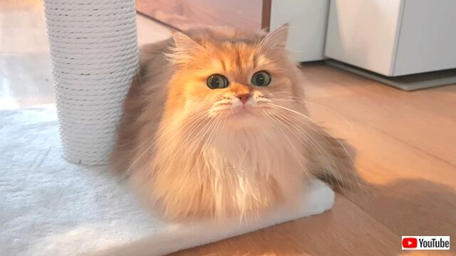 catstopped3_640