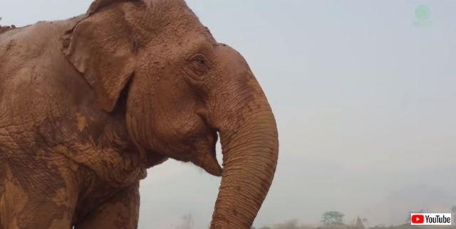 blindelephant4_640