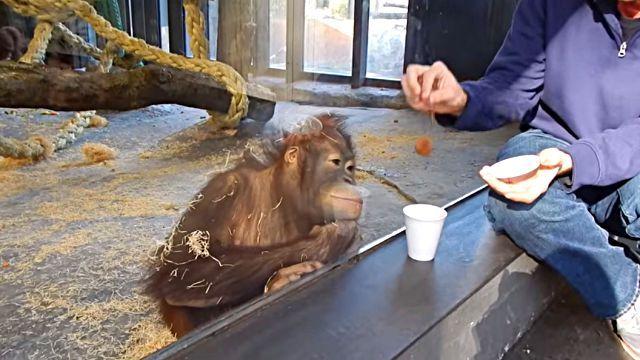 orangutanmagic1