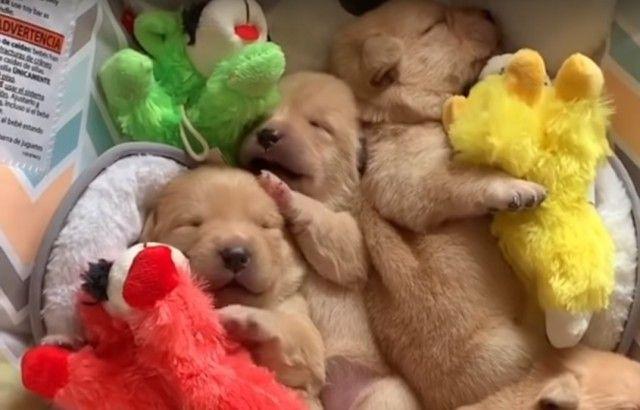 sleepingcuties_e