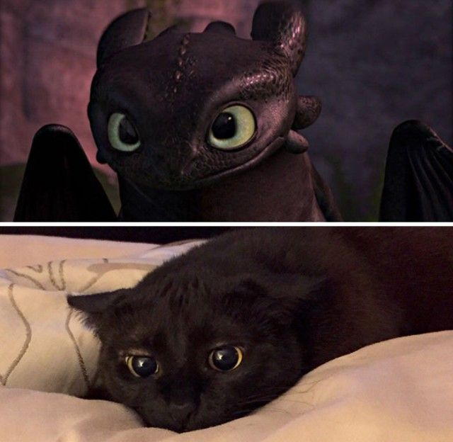 cats-toothless-lookalikes-025-57ceb125d5fcf__700_e