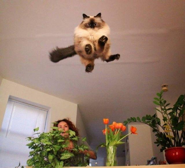flyingcats4_e