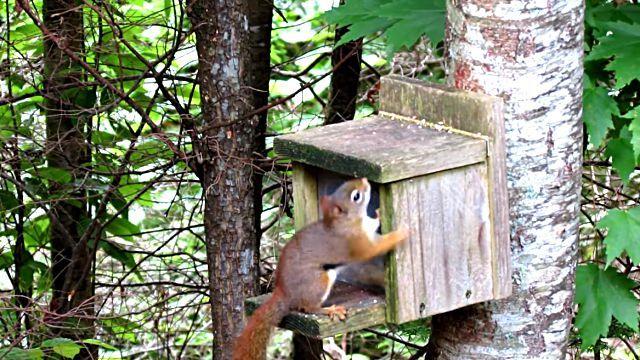 SquirrelSmashesThumb1