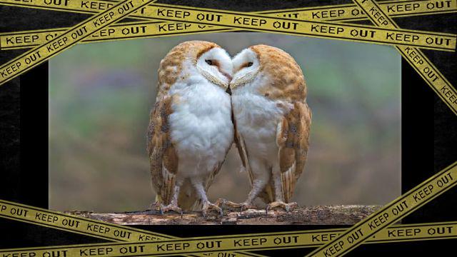 owl1-frame