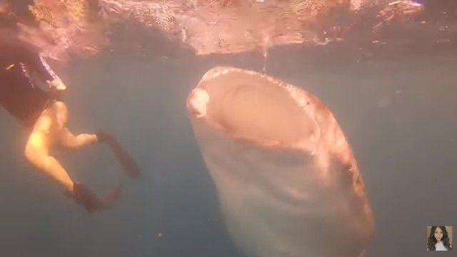 whalesharkdive2_e