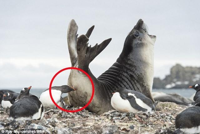 penguin1 ok