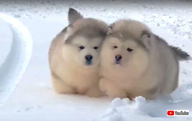 puppyballs6_640