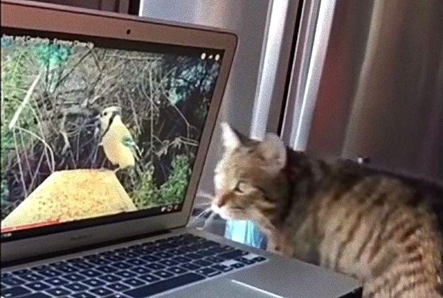 birdwatchingcat2_e