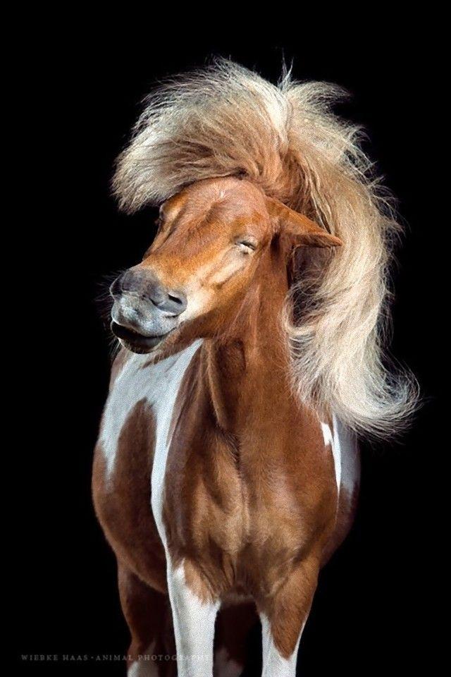 horse20_e
