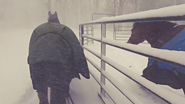 horseregret1