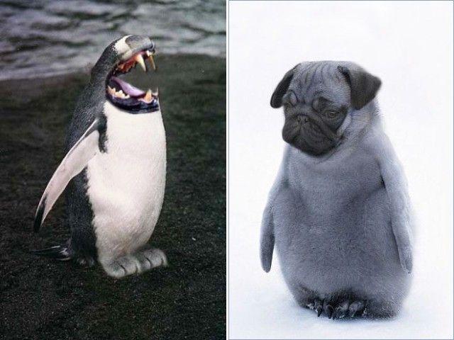 penguin12_e