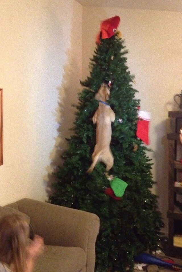 XX-animals-destroying-Christmas-11__605_e