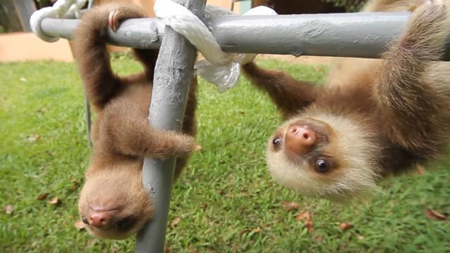 sloth-2_e