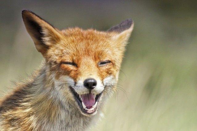 fox9_e