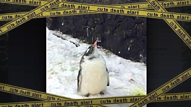 penguinbaby1-frame