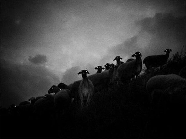 creepy-sheep14_e